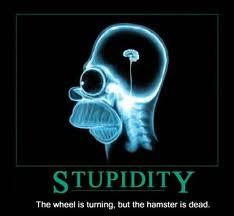 Estupidez humana 1